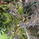 Guirlande lumineuse grise argentée luciole